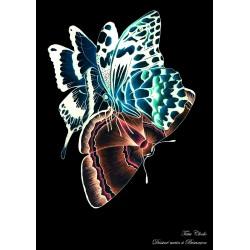 Carte A6 papillons noirs